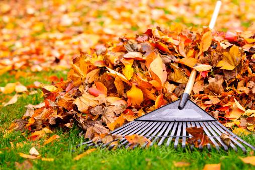 Townhome Yard Prep for Fall