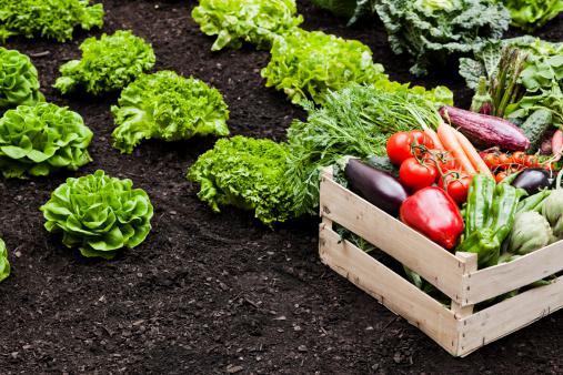 Tips for Preparing Your Garden For the Fall/Winter Season
